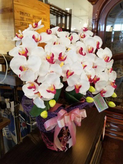光触媒 胡蝶蘭 クリーンアートフラワー 造花 鉢植え